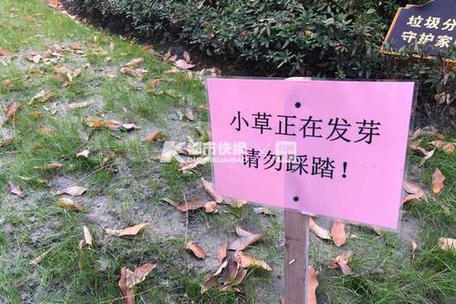 杭州西湖白堤上 小草们为什么盖了一床小棉被(图)