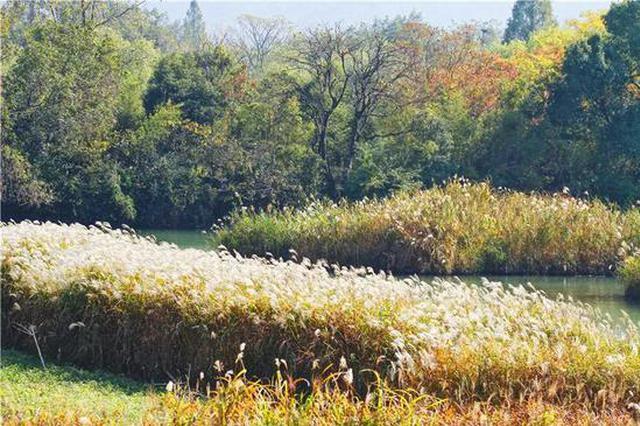 杭州西溪湿地有处隐秘的角落 免票开放快去打卡