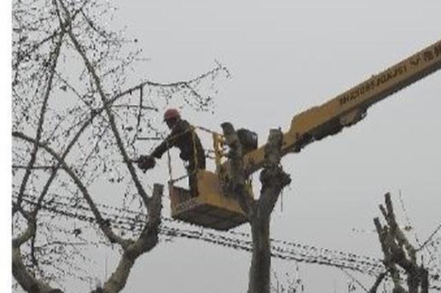 工人对慈溪部分行道树修建维护 剪枝修叶度过寒冬