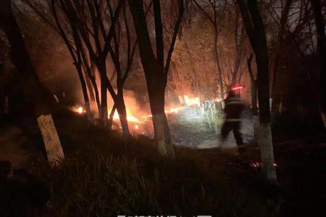杭消防员训练结束归队 发现路边绿化带着火迅速扑灭