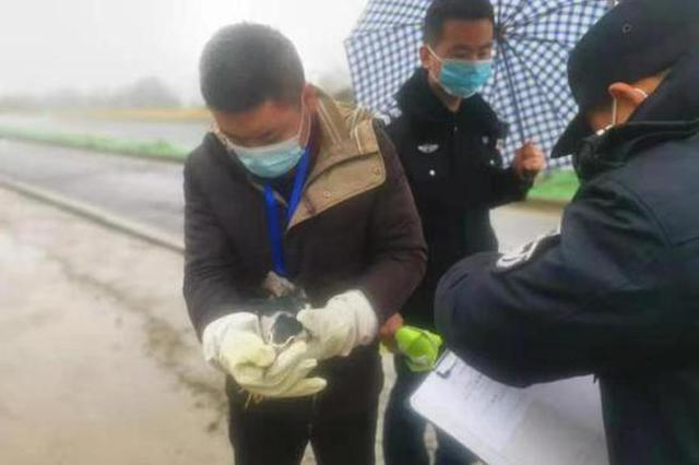 撞上车辆无法起飞 浙辅警巡逻中救助保护动物夜鹭
