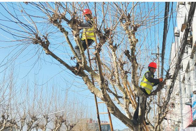 宁海紧抓冬季树木修剪最佳时机 组织人员修整行道树