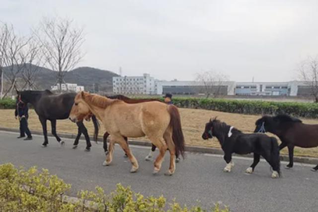浙老板带着100万的马去谈生意 结果被保洁阿姨赶跑了