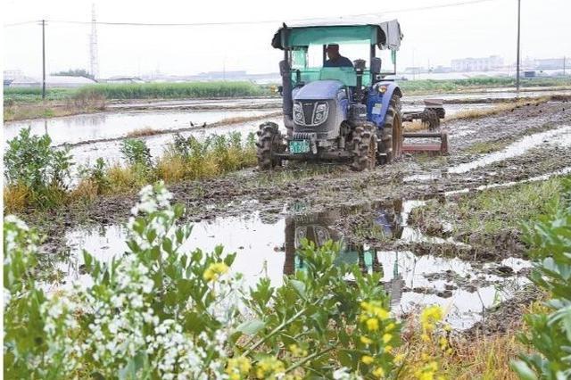 慈溪农民抢抓农时开展农事作业 为增产增收打下基础