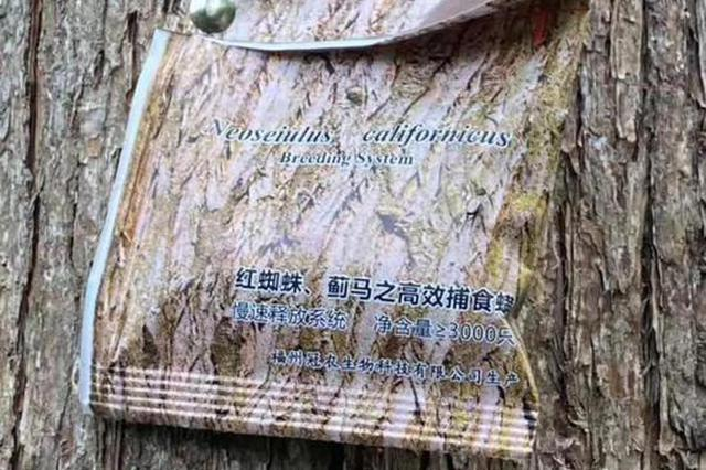 最近在杭州路边的树上看见这种口袋 不要好奇心发作