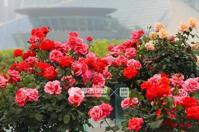 杭州今年四月特别冷 30摄氏度的日子马上就要来了