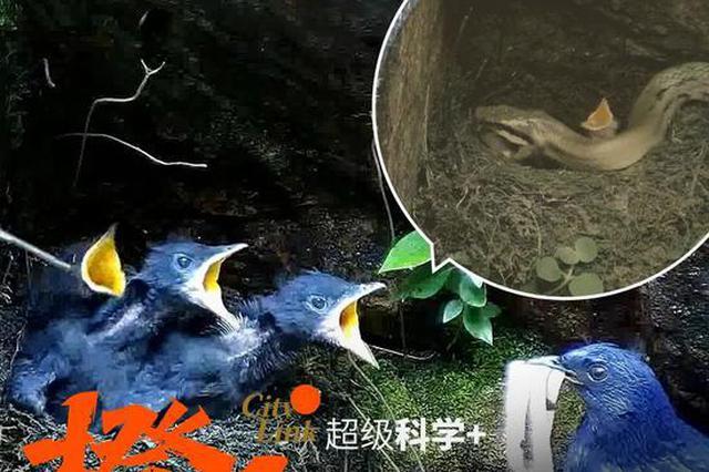 浙江展览馆展出钱塘江诗路影像 面向公众免费开放
