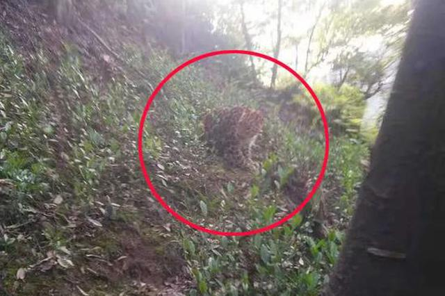 杭州转塘有疑似豹子的猫科动物出没 警方正在搜寻