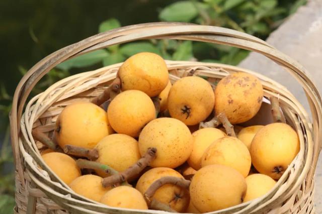 浙江塘栖枇杷100元一斤还供不应求 下周将大量成熟