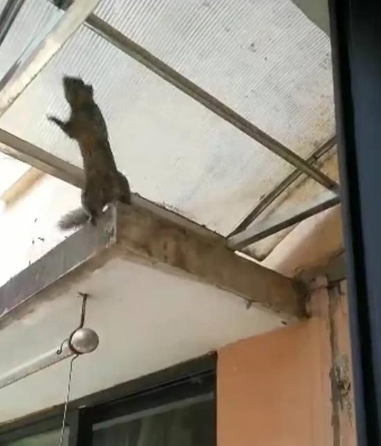 杭州一大伯家里最近被松鼠光顾 花不少心血的房子遭殃