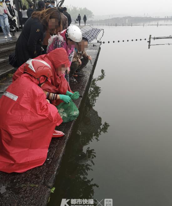 浙江一女子不听旁人劝告 在西湖里放生三十来只甲鱼