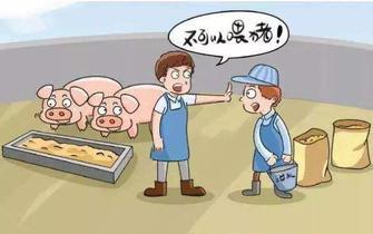 """""""直接用餐厨废弃物饲喂生猪""""拟立罚则"""