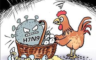 秋冬季节禽流感再现江湖