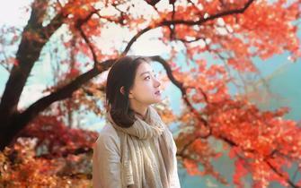 枫叶缤纷成绚丽的云霞