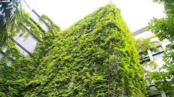 浙江农林大学建筑被绿色包围