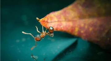 杭州昆虫摄影师镜头下的大千世界