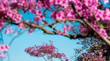金峨杜鹃花文化旅游节将在奉化举行
