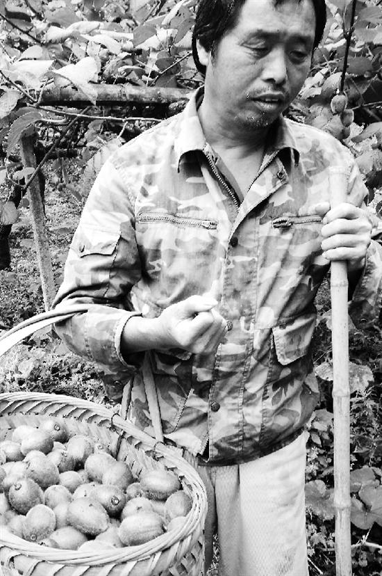 毛增林提着50斤猕猴桃回家。
