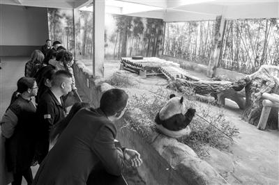 杭州野生动物世界里,现在有两只大熊猫,一只叫丽丽,一只叫山虎。