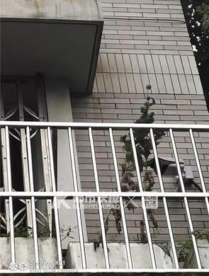浙女子阳台上种罂粟被民警盯上