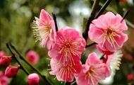 春天来了 如何辨别桃花和?;? /></a></dt> <dd><a href=