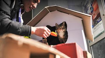 杭州90后小伙用纸盒为流浪猫搭别墅