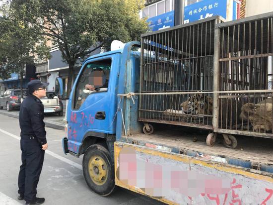 衢州现马戏团拖着狮子老虎闹市流动宣传 被罚款八千
