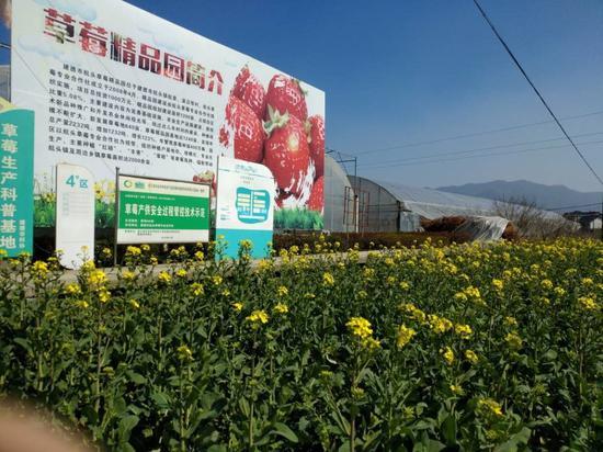 草莓精品园简介