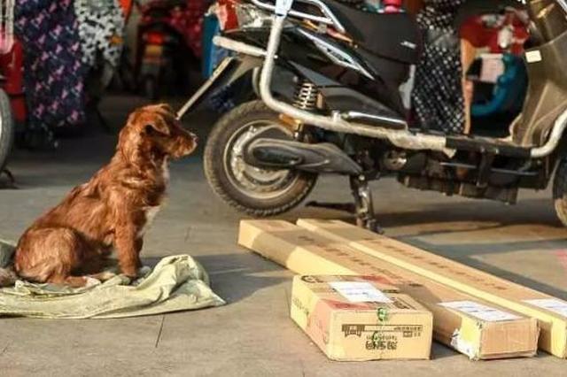 杭州1快递小哥带着超萌狗狗送包裹