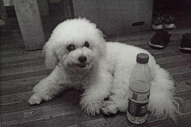 宁波一男子见狗可爱顺手偷狗 因为女友说喜欢