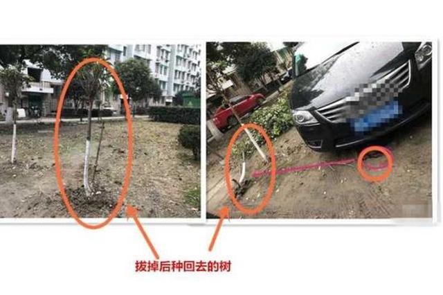 杭州1小区业主为停车 拔掉绿化带里刚种下的小树