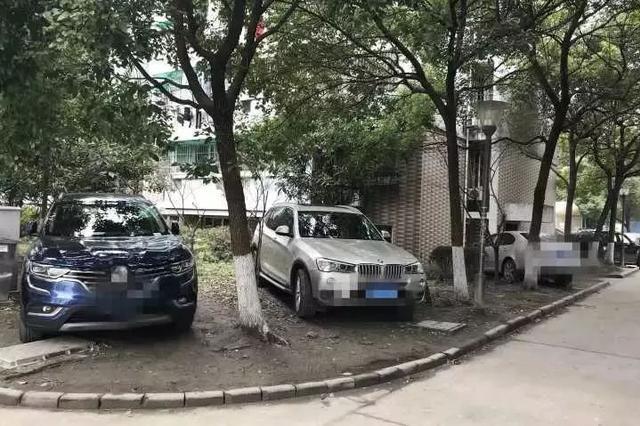 杭州一小区业主为停车 多次拔绿化带小树