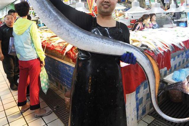 浙江舟山鳗飘香 年味浓