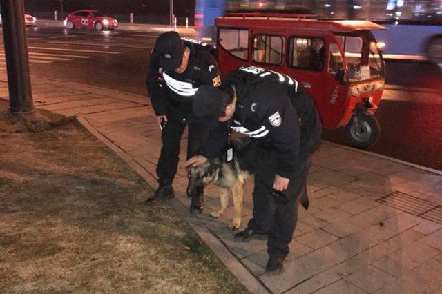 杭州1凶猛大狼狗徘徊超市附近 民警合力引至安全区