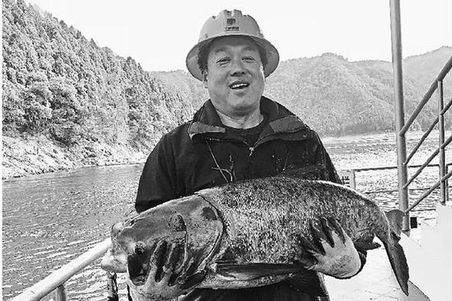 杭州千岛湖开春第一网达5万斤 每条都有20斤左右(图)