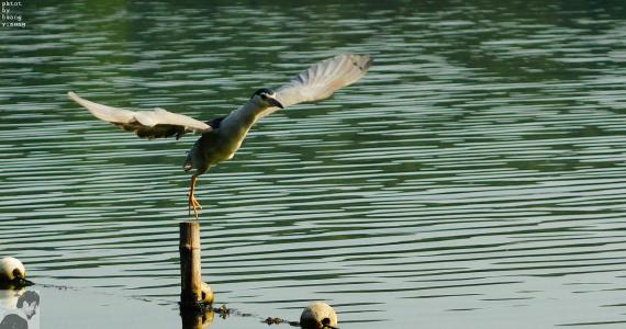 到2020年浙江建100个湿地公园 水鸟种类超180种
