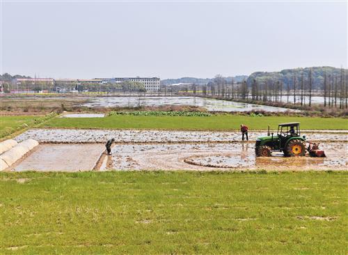 今年春耕时节,江西省新余市高新区马洪村的村民在稻田里忙碌。如今,超级稻在江西省占有相当大的比例。