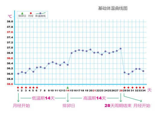 女性体温变化曲线图_如何推测排卵期_健康_新浪育儿_新浪网