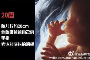 窈窕孕期三大宝:运动、饮食、作息