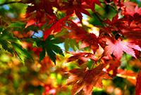 山林绚烂彩叶缤纷