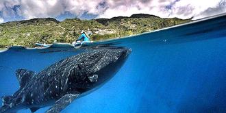 观鲸之行惊心动魄