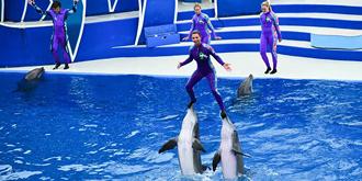 精彩绝伦的海豚表演