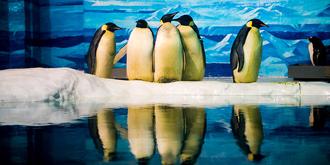 难得一见的企鹅求爱场面