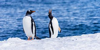 """南极半岛的""""岛主"""""""