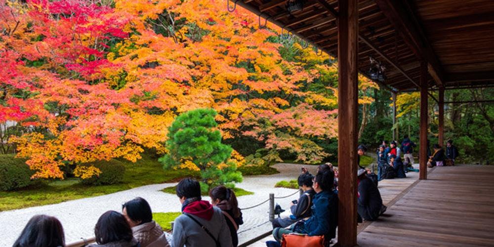 京都紅葉攻略