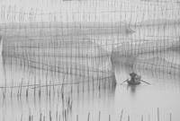 黑白寫意:八尺門圍網