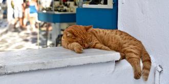 希臘街頭的喵星人