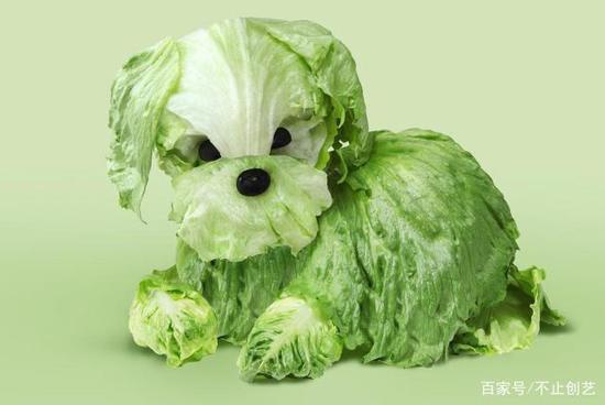 我不知道發生了什么事,內心有點凌亂,只有一點可以確定,這蔬菜我不忍心吃。