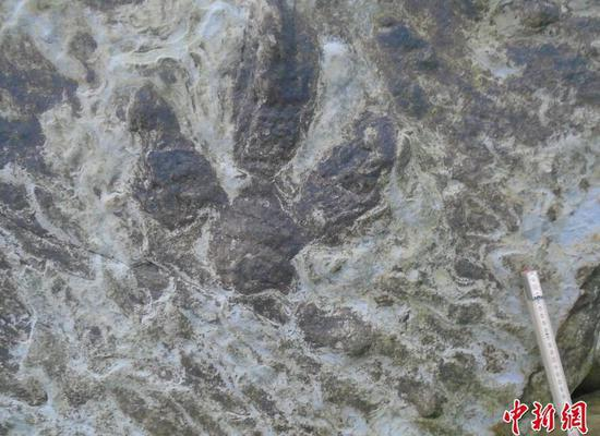 英国惊现恐龙脚印化石 细节清晰可见