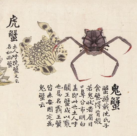 清代趙之謙《異魚圖》的奇趣與海洋生物